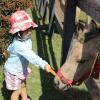 Feeding Horses